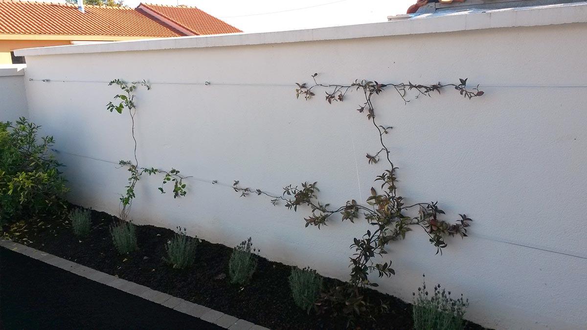 Creation Mur Vegetal Exterieur création pose mur végétal paysagiste à gétigné